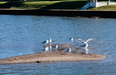 Here's the up side: the gulls now have little islands to stand on