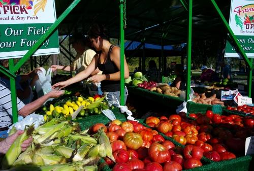 Fort Myers, Fla.  Farmer's Market.  By  Paul Goldfinger. Click left for bigger tomatoes.