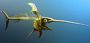 Swordfish skeleton from the National Museum of Natural History. Internet photo