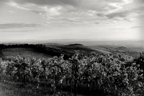 Tuscan vineyards. By Paul Goldfinger © Click left for full view