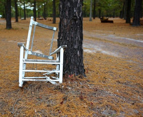 From the Pine Barrens Series.  By Paul Goldfinger © 2013