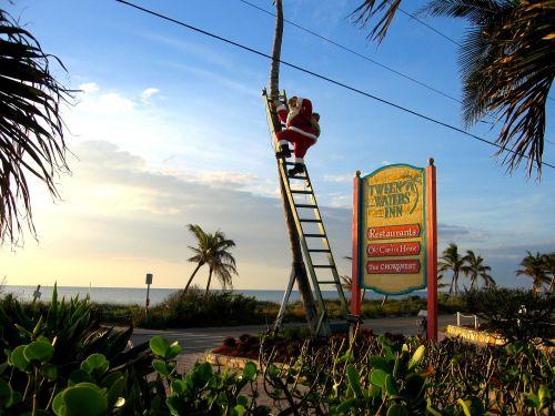 Santa climbs a palm tree on Sanibel Island, Florida.  Paul Goldfinger photo ©