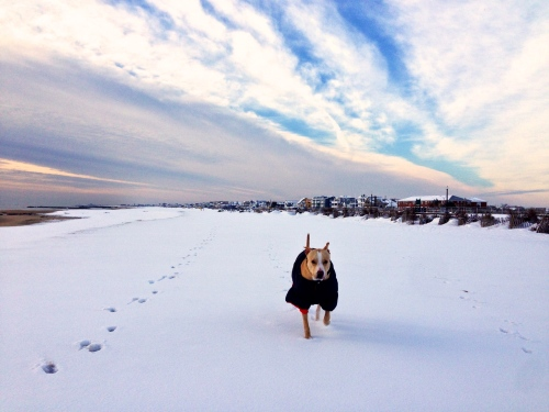 Ocean Grove beach. Jan. 28, 2014. By Moe Demby, Blogfinger staff ©
