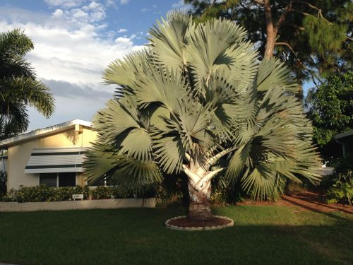 Fort Myers, Florida. 2014. Paul Goldfinger photo. ©
