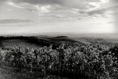 Italy.  Chianti vineyards.  By Paul Goldfinger ©