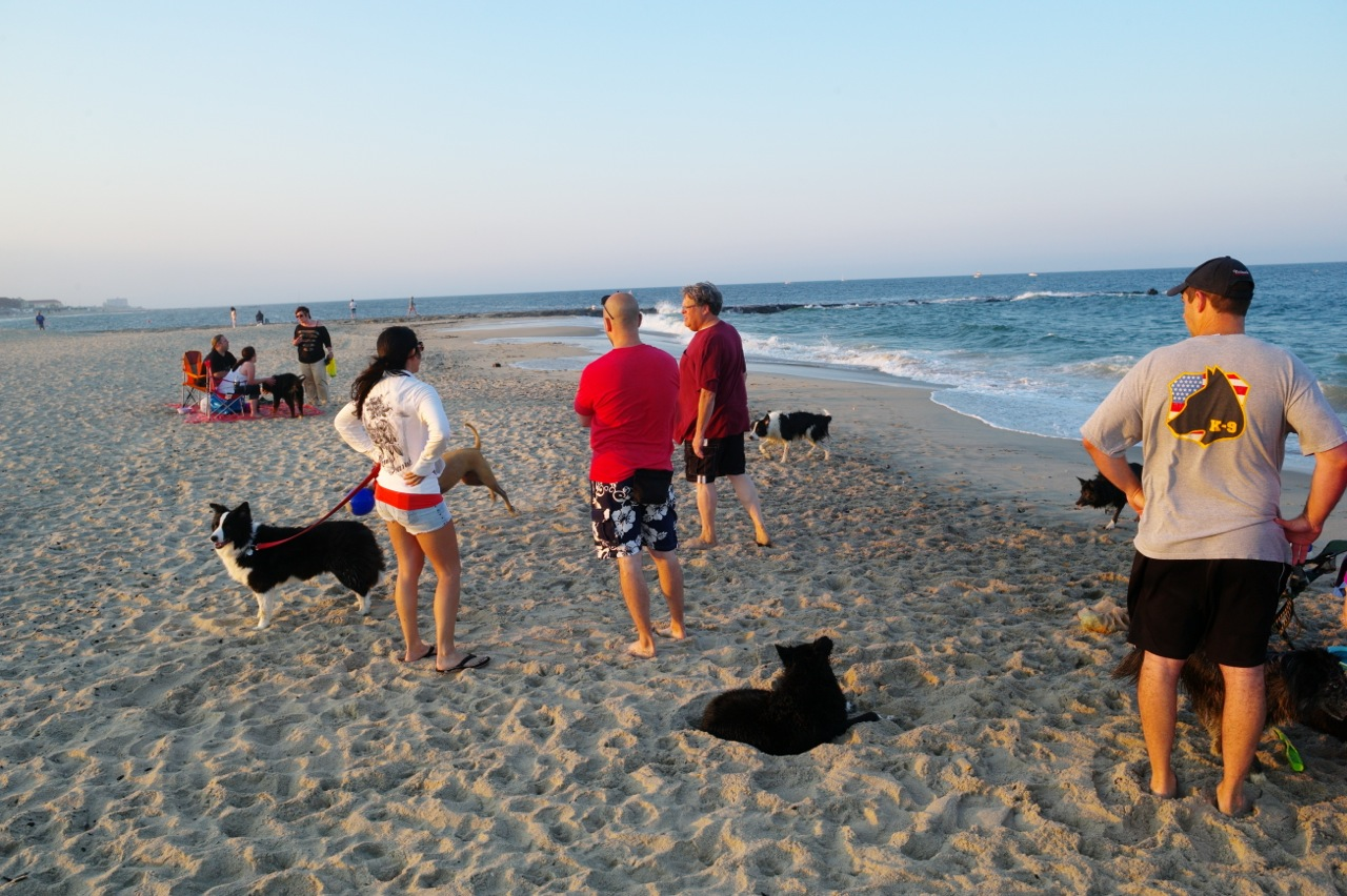 chico goes to asbury park dog beach blogfinger
