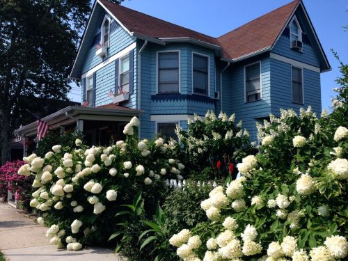The most beautiful flowers in the state of New Jersey.  Carrano residence in Ocean Grove on Mt. Hermon Way.  Blogfinger photo