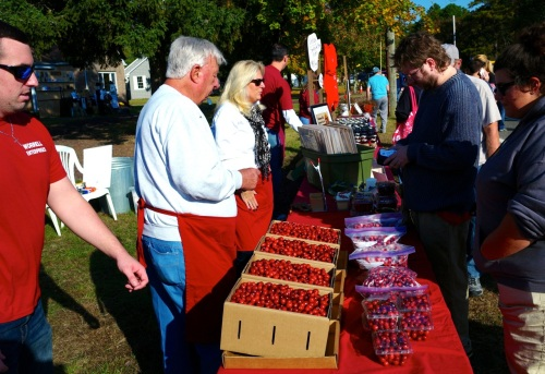 Selling boxes of cranberries at the Chatsworth festival. We bought 7 1/2 pounds.  By Paul Goldfinger 2014. ©