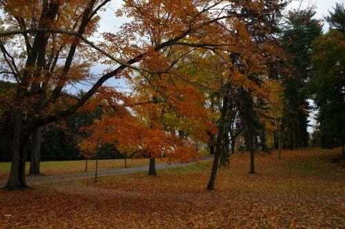 Millbrook, New York, October 2014. By Paul Goldfinger ©