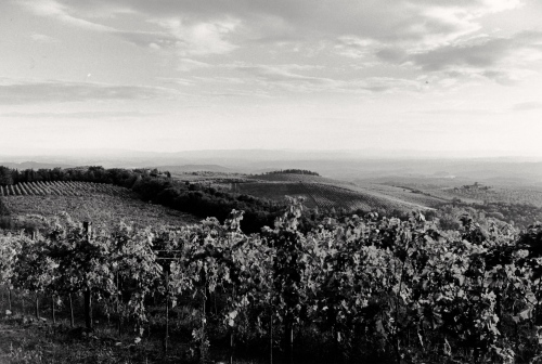 Chianti region, Tuscan countryside. By Paul Goldfinger ©