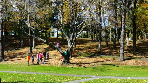 Town park in Millbrook, dedicated to veterans. Paul Goldfinger photo. Oct. 2014