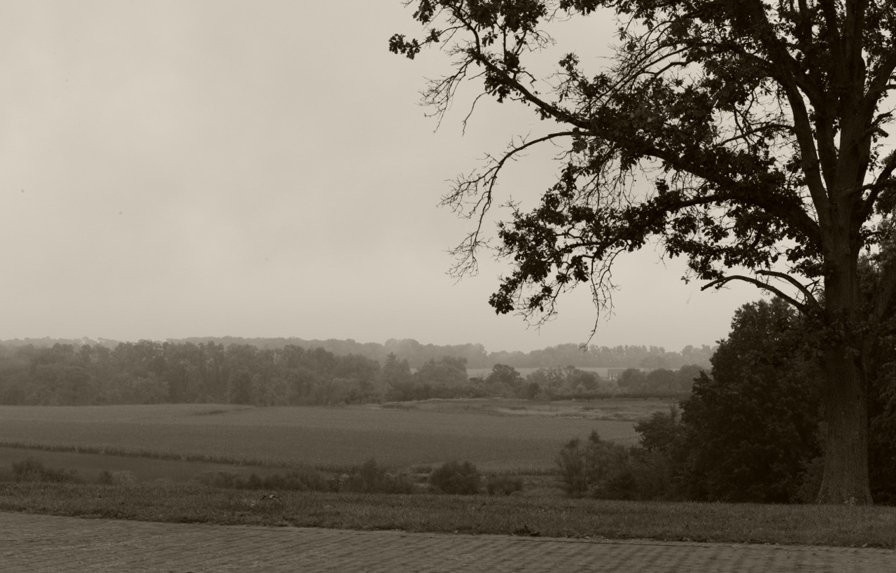 Monmouth Battlefield State Park. By Paul Goldfinger 2014. ©