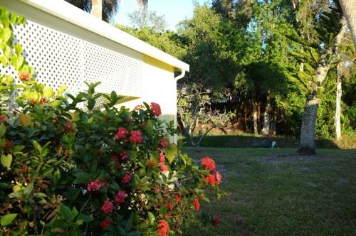Peeking into a backyard . Tropicana.