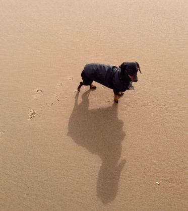 Duke pondering his choices on the OG beach.    Photograph by Lee Morgan ©