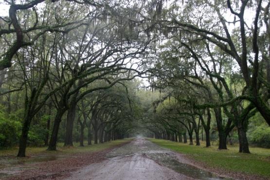 Wormsloe in Savannah, Georgia. By Paul Goldfinger ©