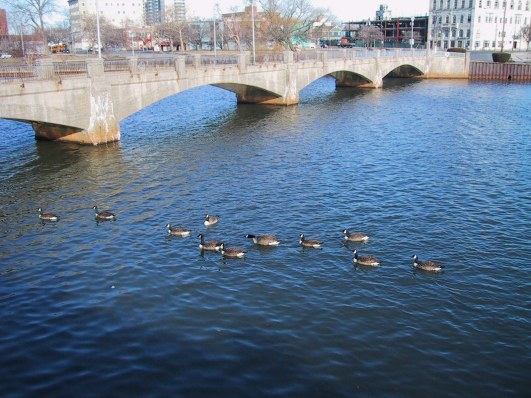 """If it quacks like a duck……""  Wesley Lake, 2010.  Paul Goldfinger photo ©"