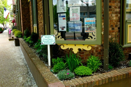 New perennial plantings  at Pilgrim Pathway and Pitman