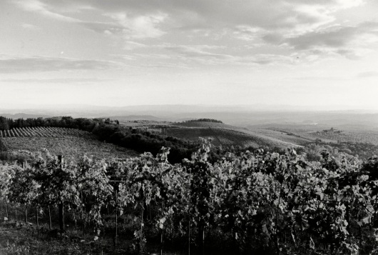 Tuscany, Italy.    By Paul  Goldfinger.  Silver gelatin print. ©