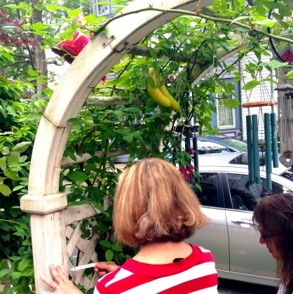 Some visitors view this Delaware Avenue banana tree. Blogfinger.net  photo