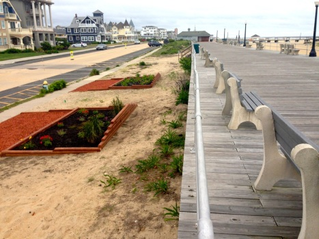 Portion of the boardwalk from about Heck south to Bradley. Note new flower beds.  June 4, 2015. Blogfinger photo. ©