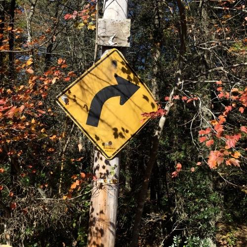 Waretown, New Jersey. Paul Goldfinger photograph. October 2015 © Blogfinger.net