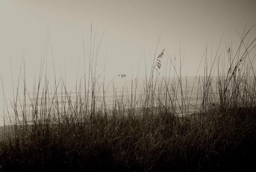 Gulf Coast, Florida. 2014.  By Paul Goldfinger ©