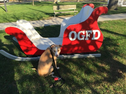 Chico, the Blogfinger mascot, inspectedd the sled, but no amount of coaxing could get him to climb aboard. Blogfinger photo. Nov. 26, 2015.