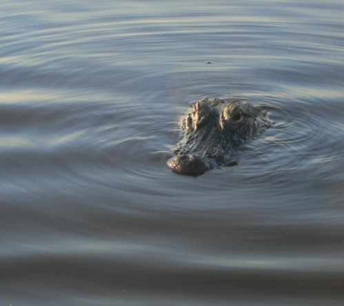 April Fool.   It's the Everglades. 2012.  Paul Goldfinger photo. ©