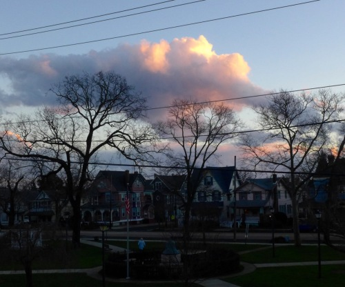 Skylark. Firemen's Park. January 10. 2016