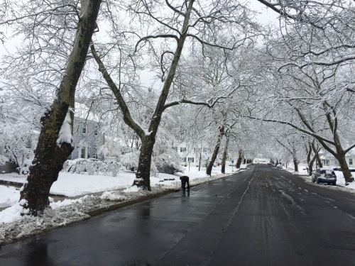 4th Avenue. P. Park. Friday morning Feb 5 for all these photos © Paul Goldfinger
