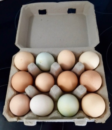 Chicken eggs from the Better Food FArm in Estero, Florida. March 18, 2016. By Eileen Goldfinger. ©
