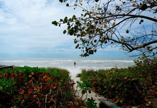 Naples Florida, southwest Florida. Paul Goldfinger © March 2016.