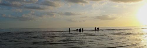 Sanibel Island, Southwest Florida. January 2013. Paul Goldfinger photo. ©