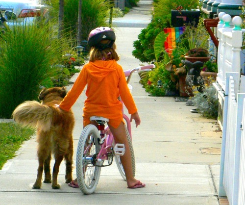 Even cute dogs and kids need to follow the rules. Paul Goldfinger photo. © OG lifestyles.