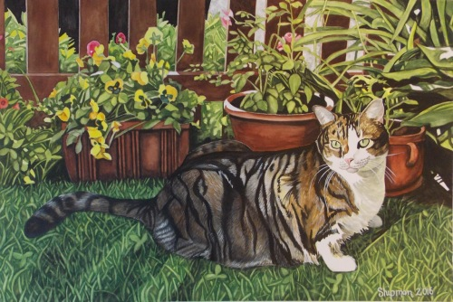 Cat by Mary Lou Shipman