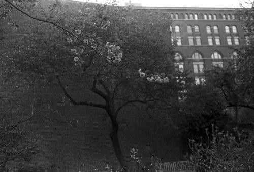 Lower Manhattan . Paul Goldfinger photo. Silver gelatin image. Undated ©