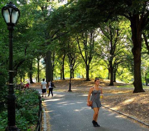 Central Park.  August, 2014.  Paul Goldfinger photo ©