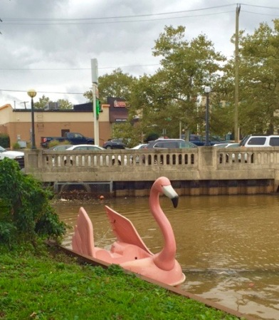 Pink swan tries to escape to Asbury Park, just before the storm.  Sept. 29, 2016. Stephen Goldfinger photo, Blogfinger staff. ©