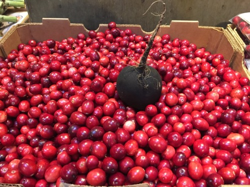 This vegetable sits in a bed of cranberries at Delicious Orchards in Colts Neck. I placed the mysterious black creature there. Blogfinger photo ©