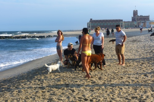 Asbury Park dog beach. July, 2015. Paul Goldfinger photo. ©