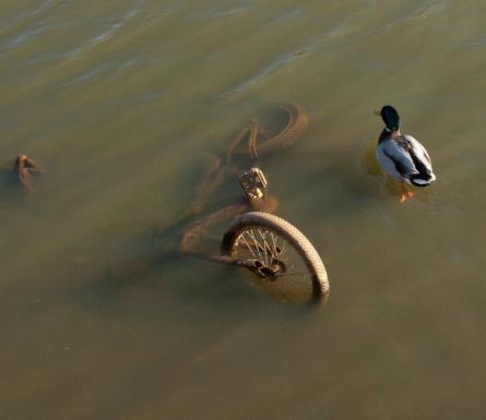 Wesley Lake. Undated. Ocean Grove, NJ. Citizen photographer for Blogfinger. ©