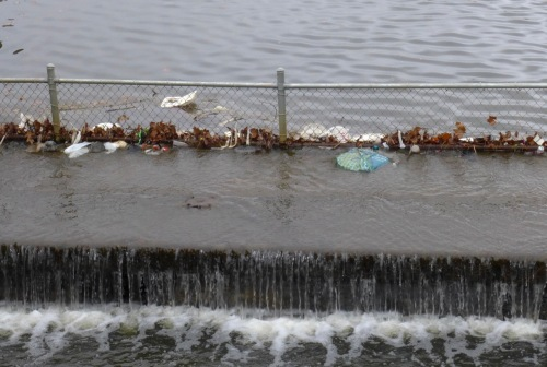 At the east end of Wesley Lake where debris accumulates near the catch basin. Blogfinger photo. ©