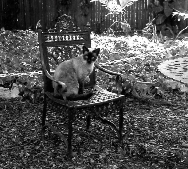Hemingway cat - Version 2
