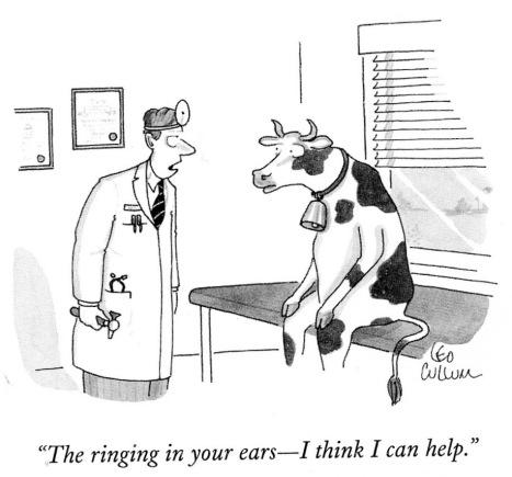 cow s(2)
