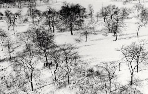 centrlal park snow 2