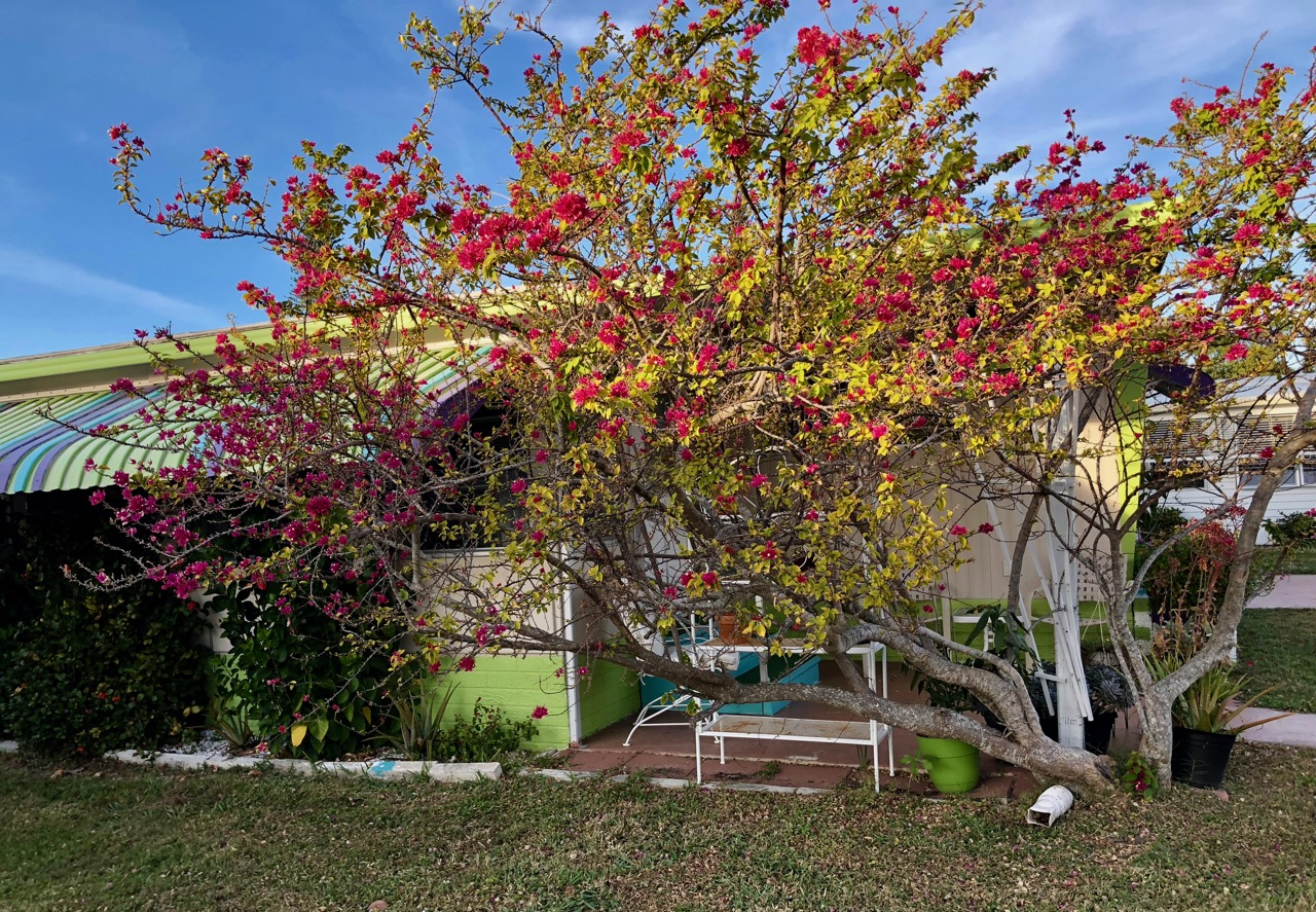 Tropicana Park   Blogfinger